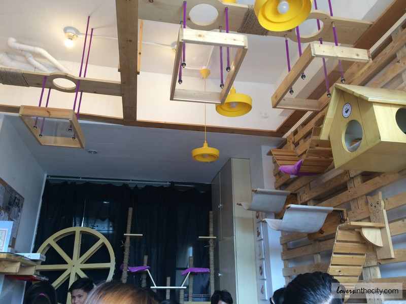 Cat Cafe Manila Interior