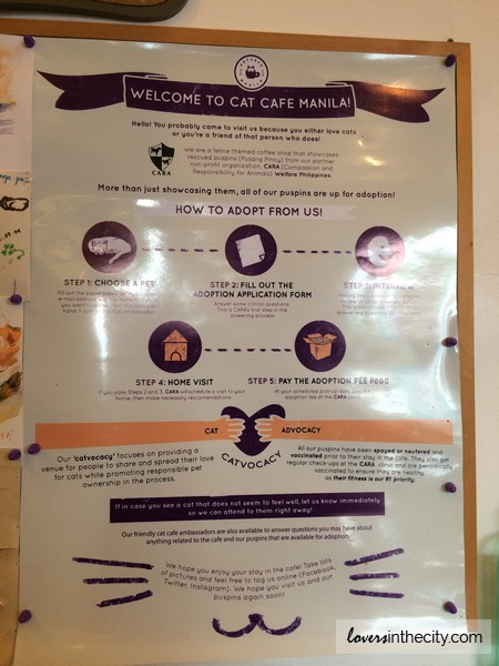 Cat Cafe Manila House Rules