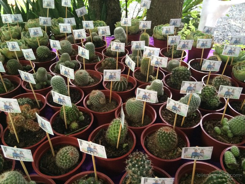 Agape Springs Wedding - Succulent and Cacti Favours